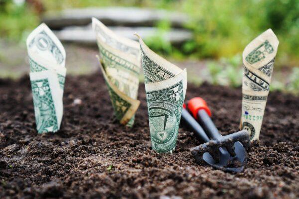 pengevækst