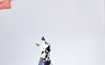 Sådan gør du det billigere at være hundeejer