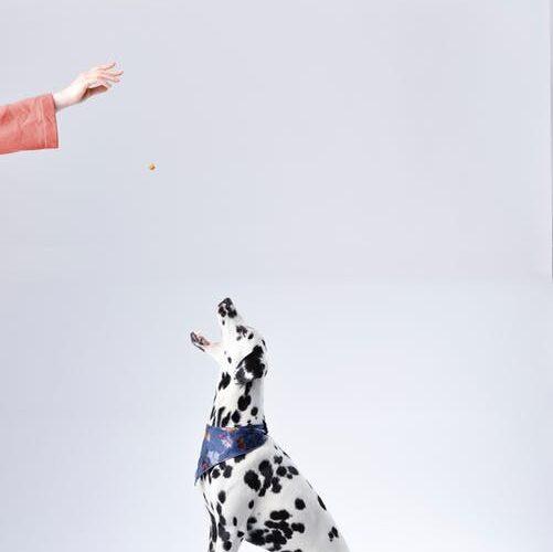 Hund får godbid